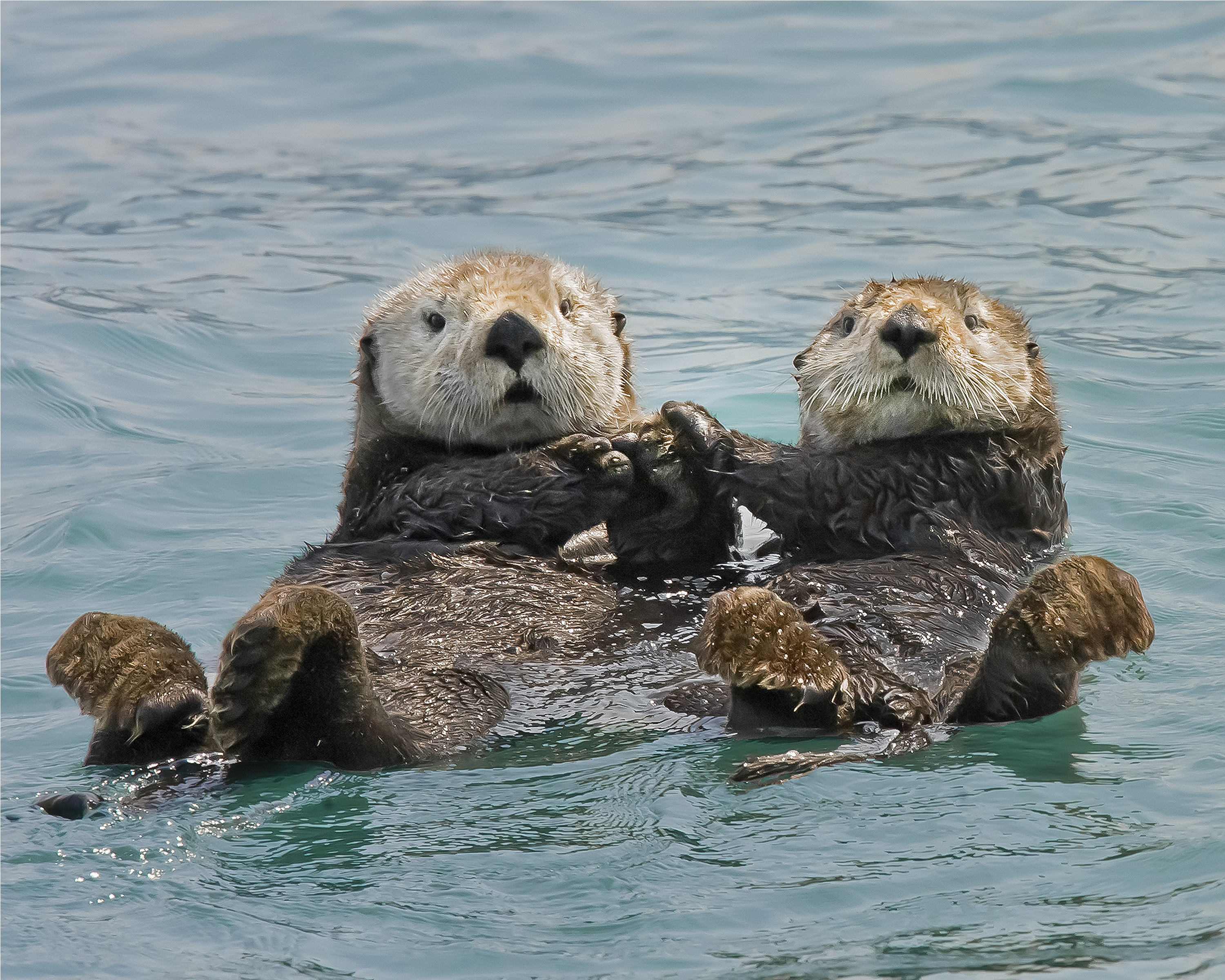 Two bears one otter