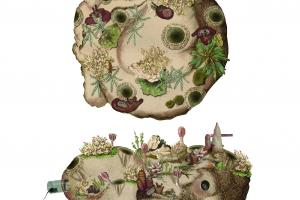 Stylized topographical illustrations of a circular chunk of land featuring various flora and fauna, as seen from above and from the side.