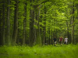 A group of people walking in the woods