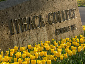 tulips in front of the Ithaca College entrance sign