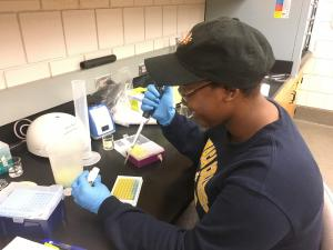 student pipetting into a well plate with bright yellow and blue solutions