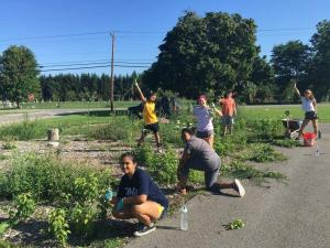 MLK Scholars in an open field picking weeds and gardening