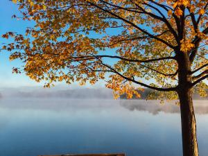 Photo of bench, overlooking lake and tree by Aaron Burden on Unsplash