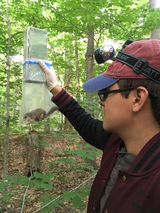student in the woods holds up a clear bag with flying squirrel inside