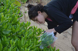 a woman bends over to examine succulent plants on a beach