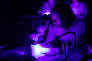 A student in a dark room sits lit from below by the white spot on their microscope.  The room is bathed in deep purple light.