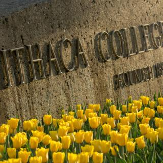 The concrete structure at the main entrance to Ithaca College surrouned by yellow tulips.