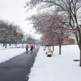A paved pathtway through a snow-covered and tree-lined campus quad.