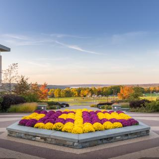 mums on Ithaca College campus